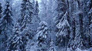 видео Отдых на Селигере зимой