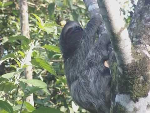 Bocas Bound Jungle Lodge & Hostel