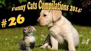 Коты и собаки.