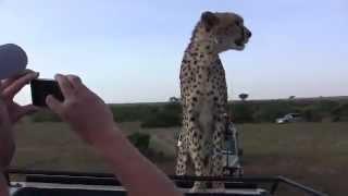 Гепард шокировал туристов