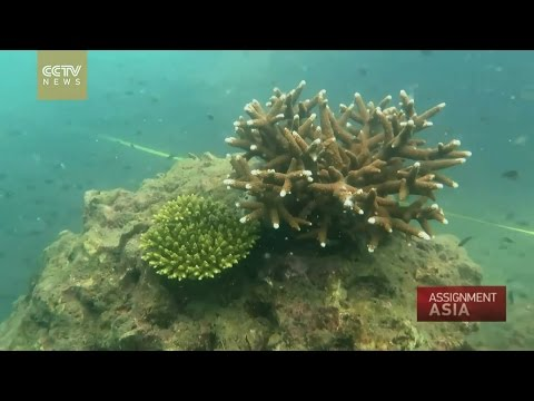 Assignment Asia Episode 54: A Fragile Environment