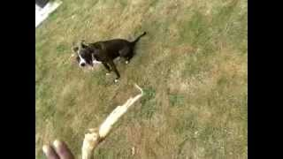 Nature Nottingham Dog Training - Sit, Stay Come