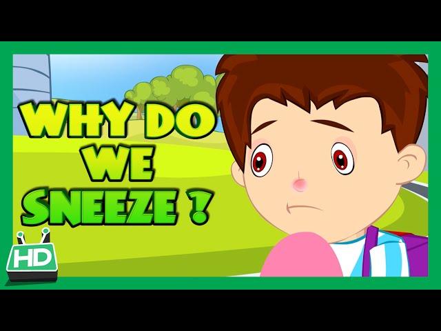 Why Do We Sneeze ?