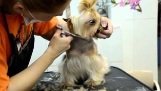 видео салон стрижки животных
