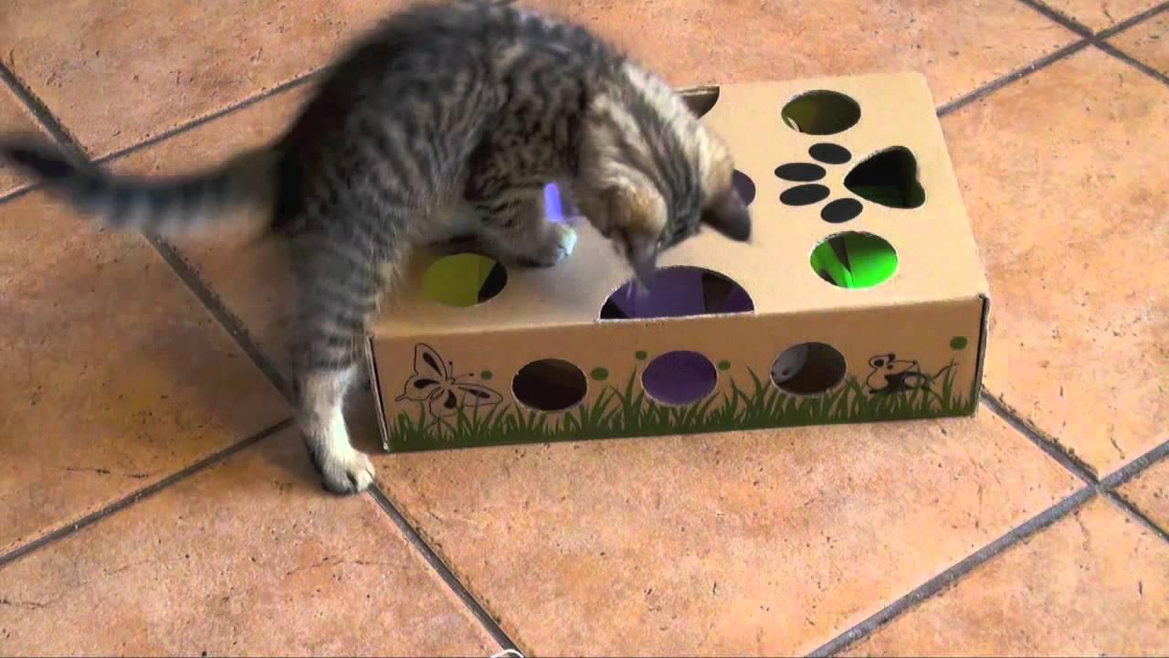 Best Kitten Toys 13