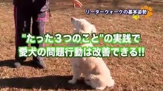 http://m-md.net/info/dogfujii ←50年以上、犬と共に暮らし、1000...