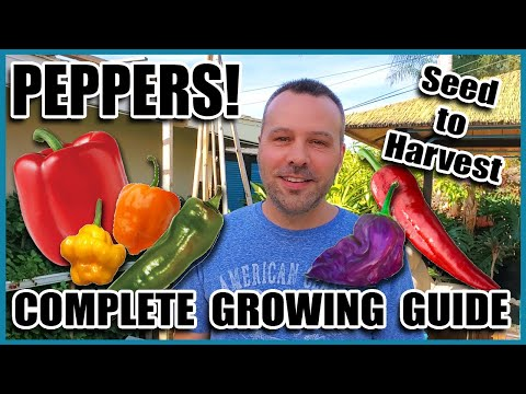 Pepper Growing Tips - Complete Gardening Guide on How to Grow Peppers // Grow More Peppers per Plant