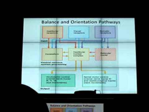 Applied anatomy & physiology of vestibular system-1 - YouTube
