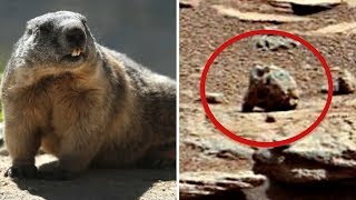 5 Most Mysterious Creatures Caught In Space!