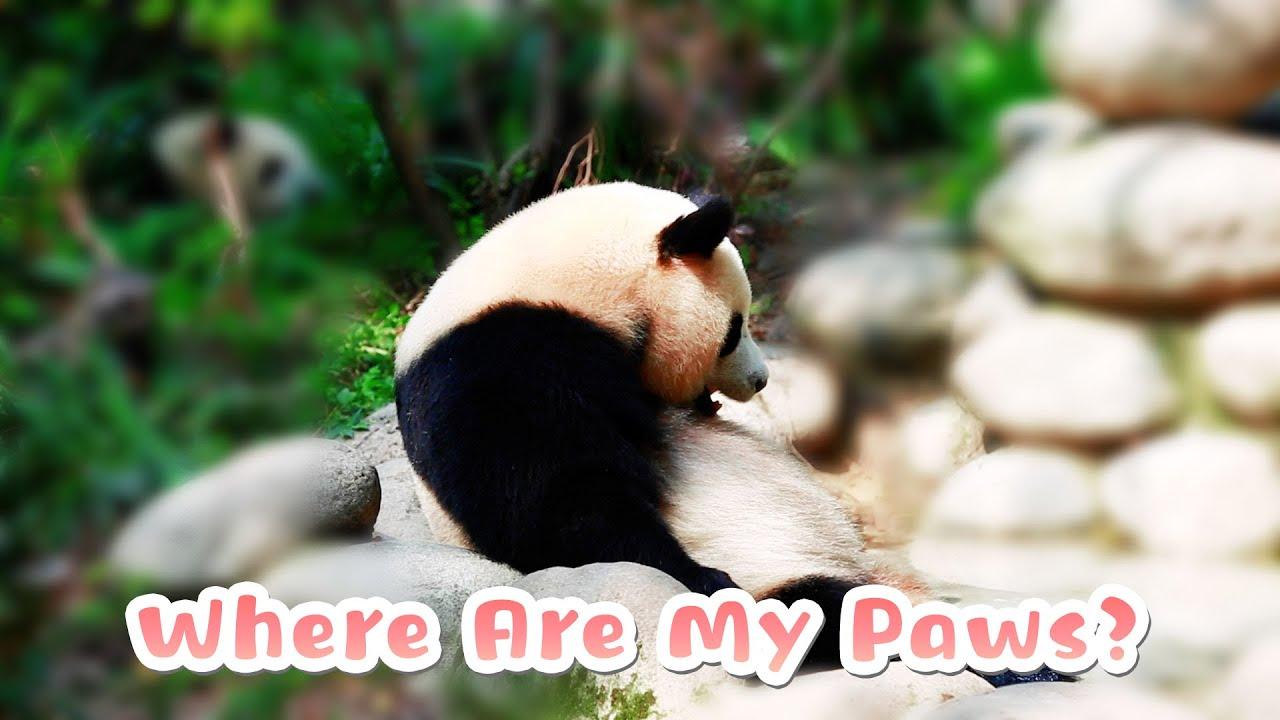 Panda's Biggest Concern While Bathing | iPanda