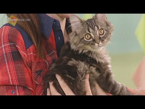 Вопрос: Кошки и коты какой породы позволяют гладить себя против шерсти?