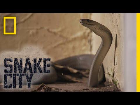 Encountering a Monster Mamba | Snake City