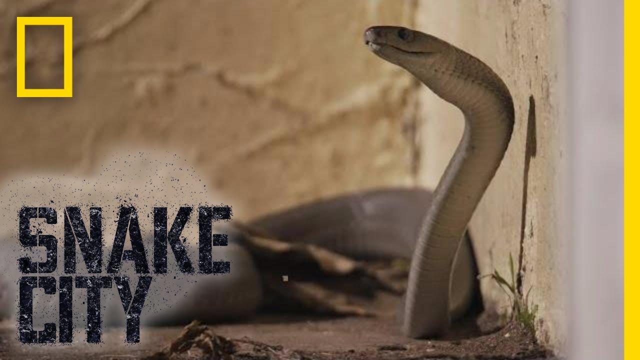 encountering monster mamba snake city youtube