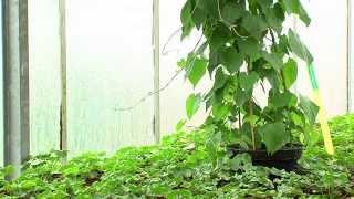 Environnement : jardinier avec la lune