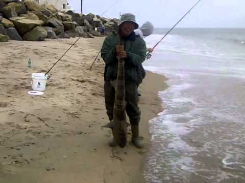 Surf fishing carpinteria ca 06 19 2011 4 youtube for Fishing without a license california