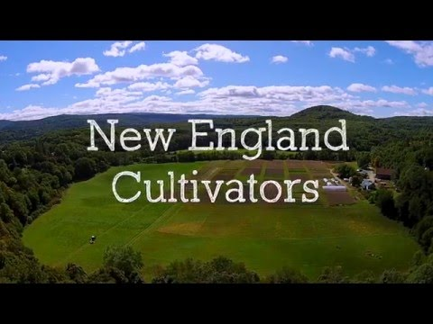 Celeste Longacre Garden Tricks with New England Cultivators