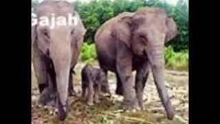 fauna di indonesia punya nahlia dan yunida