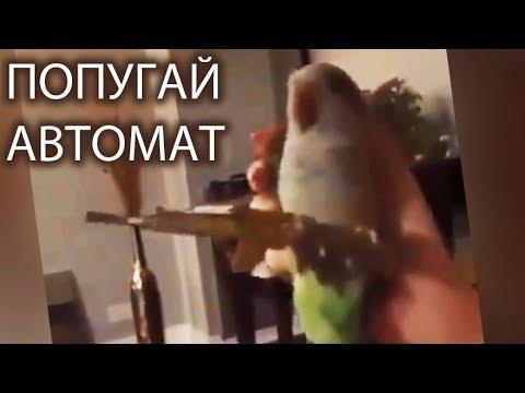Попугай с автоматом | Попугай стреляет из автомата | Parrot with a gun