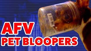 ☺ AFV Funniest Pets & Animals Home Video Bloopers, Reactions & Fails