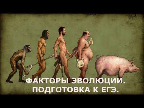 Видео: Эволюция. Направляющие и не направляющие факторы эволюции,