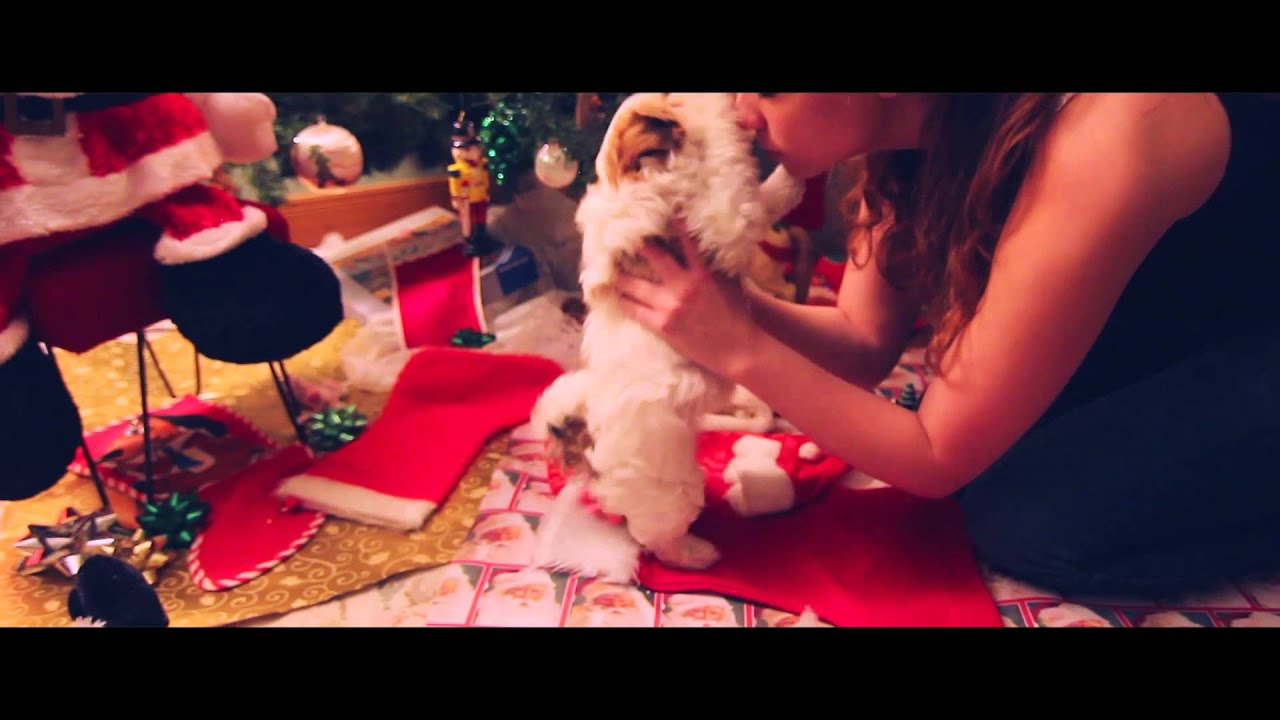 Puppy's First Christmas - YouTube