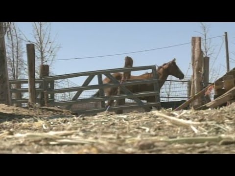 Horses seized from woman previously accused of animal cruelty
