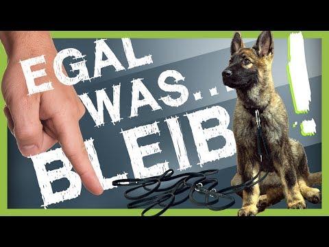 Wie Du deinem Hund BLEIB beibringst (egal was passiert)