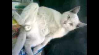 Кот ,Депресняк, кошачья не взаимная любовь...