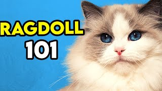 Ragdoll Cat 101 - Learn EVERYTHING About Them!