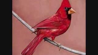 Alexisonfire - Young Cardinals