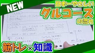 日本一やさしいグルコースの流れ【グルコース・ATP・光合成】