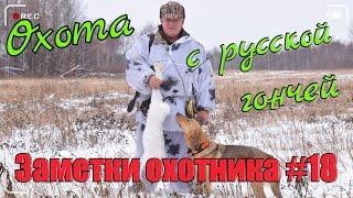 Охота. Заметки охотника #18. За зайцем с русской гончей. Разделка зайца. Hunting in Russia