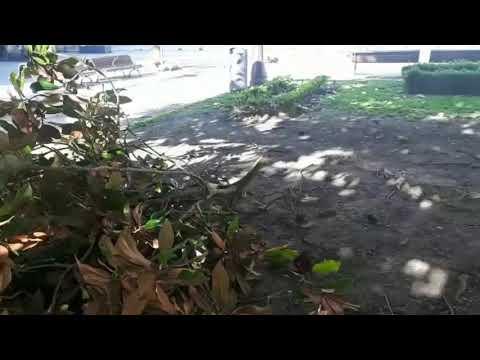 El temporal causa daños en la Praza Maior de Lugo