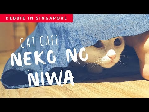 Singapore Cat Cafe with only adopted cats!   Neko no Niwa