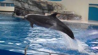 Farglory Ocean Park Dolphin Show: Part 1 遠雄海洋公園海豚秀