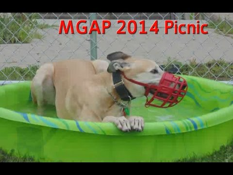 Maritime Greyhound Adoption Program Picnic 2014