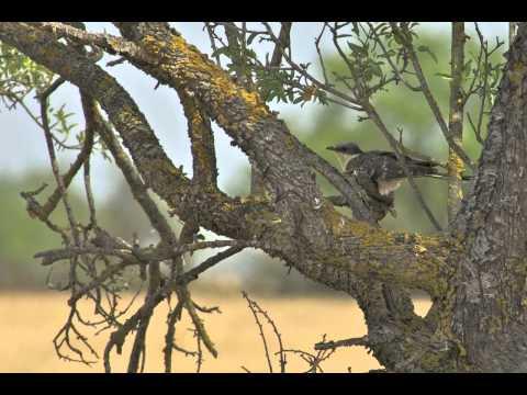 vogel- en natuurreis Noord-Spanje
