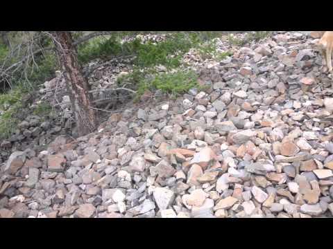 Understanding The Mine Tailings In Alder Gulch