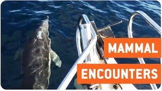 Amazing Fishing Trip | Whales and Dolphins and Seals, Oh My