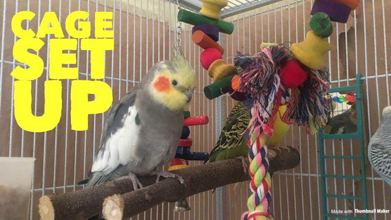 Patient wants adding a cockatiel to a cage stitch xxx