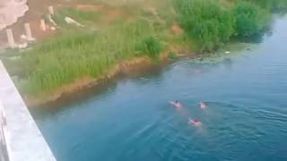 Прыжки с моста в реку Малая Кокшага