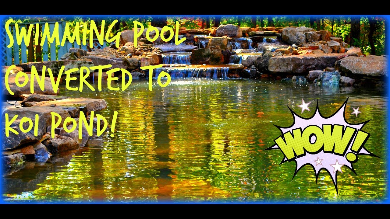 How to convert a swimming pool into a koi pond water for Pool to koi pond conversion