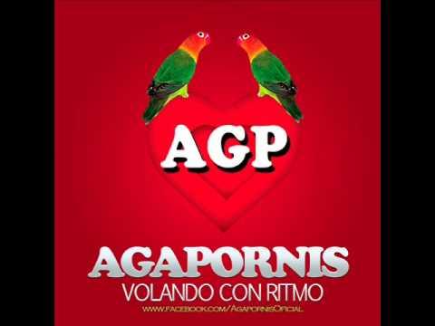 Agapornis - En el muelle de San Blas (Damian 2013)