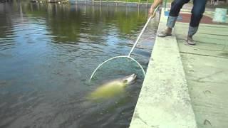 Рыбалка в Тайланде Паттайя 000(, 2013-07-22T11:41:43.000Z)