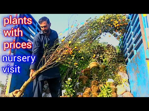 Nursery Visit And Plants With Price || March 22, 2019