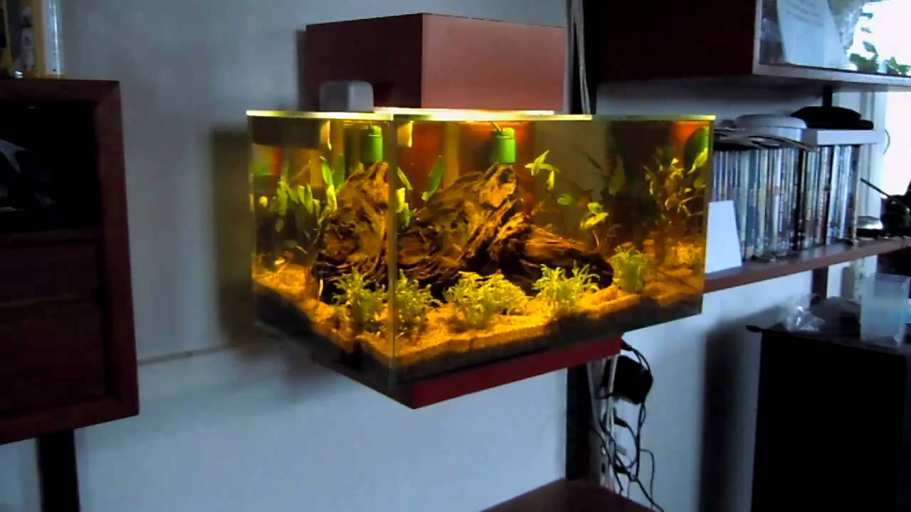 Wall Mounted Fluval Edge Youtube