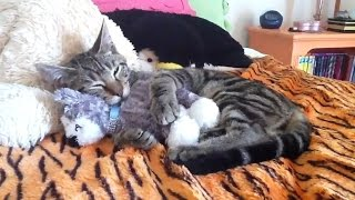 Cats Who Love Their Teddy Bears