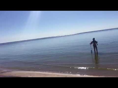 Креветки в Балтийском море