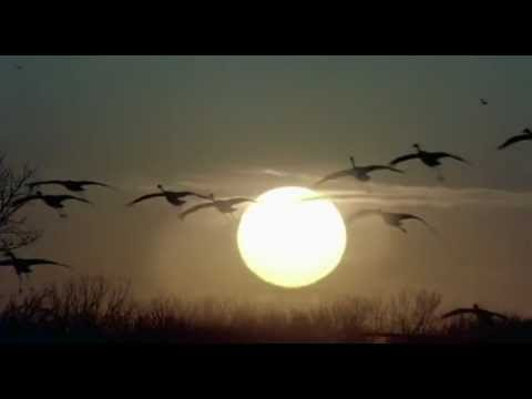 Sade - Morning Bird (music video)