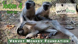 Totsy the tiny angel visits Global, bath time for Floki monkey, Skunkey monkey check-up.